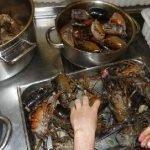 tête de homard à décortiquer